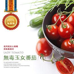 光合-玉女番茄