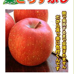 日本 青森.富士蜜蘋果