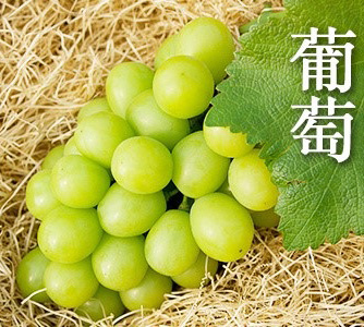 岡山葡萄 網購