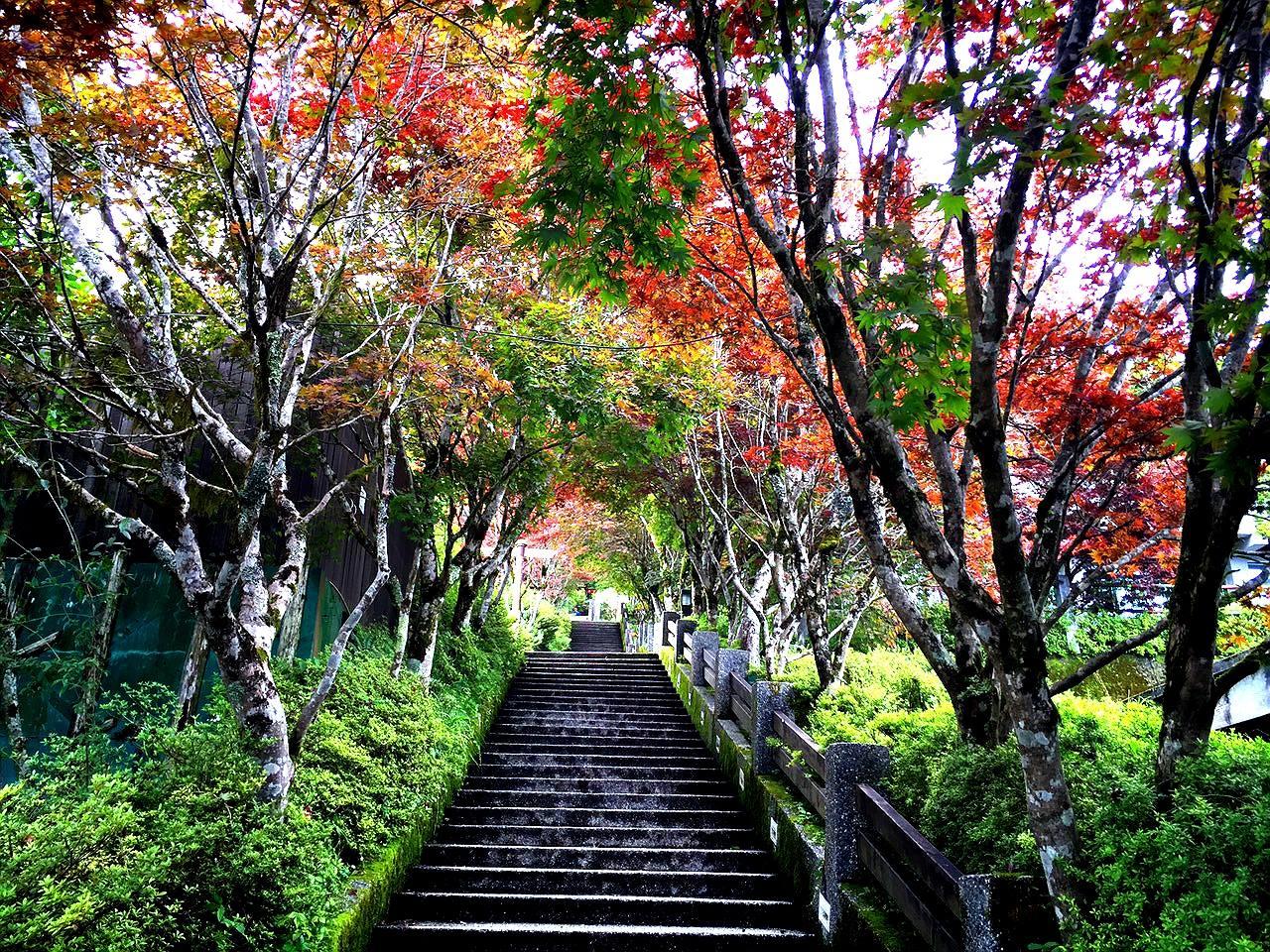 太平山 賞楓