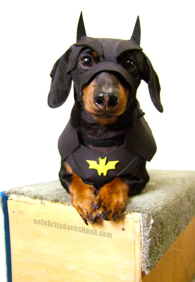 寵物 蝙蝠俠