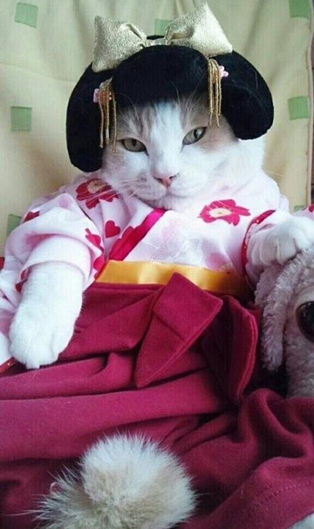 貓咪 變裝