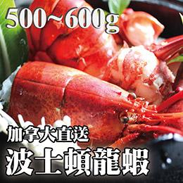 波士頓龍蝦(500g~600g)/隻。感謝電視媒體推薦。