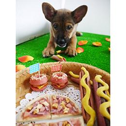 【Pet cuisine】寵式潛艇堡(雞肉) 3入