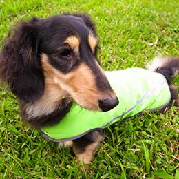獨家寵物智慧雨衣。多色可選