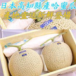 日本高知溫室哈蜜瓜
