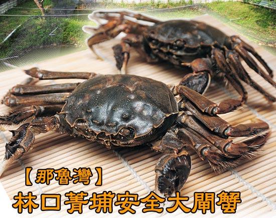 那魯灣安全水果網-林口菁埔養殖場大閘蟹。