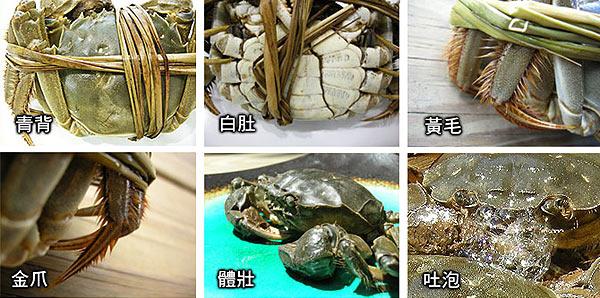 大閘蟹的五大外形特徵是:青背、白肚、黃毛、金爪、體壯。