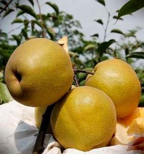 秋季進補,秋季料理DIY,換季調養食補,食補水果料理,秋天養肺