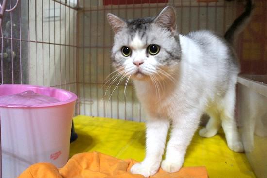 部落客,貓咪,日本GEX,貓用淨水飲水機
