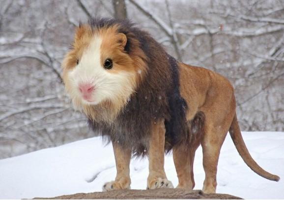 動物合成圖,PS高手,可愛動物圖,無違和感合成圖,搞笑圖片