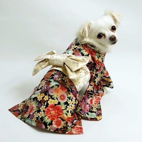 Kimono for pets