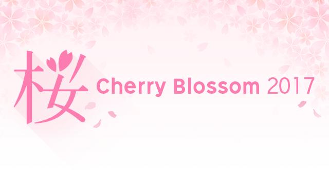 Cherry Blossom 2017