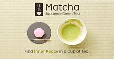 Matcha Catalog