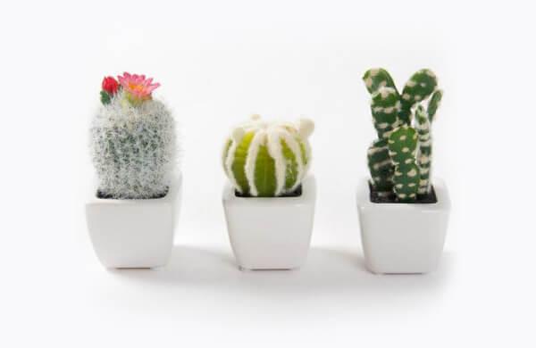 裝飾觀賞用植物,變成箱型花盆