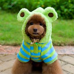 Kojima可愛動物造型變身裝