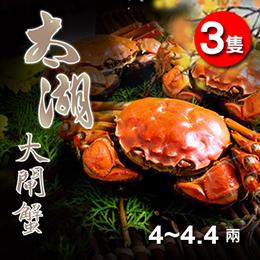 正宗太湖大閘蟹 4~4.4兩X3隻
