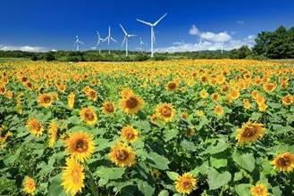 一張含有 草, 天空, 花, 室外 的圖片  描述是以非常高的可信度產生