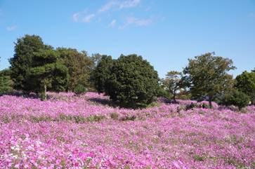 昭和記念公園_Showa Kinen Park
