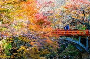 八王子市「高尾山」 夢幻楓紅景觀搭配壯麗富士山