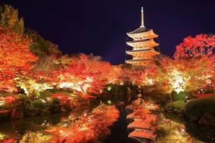 「京都市東寺」 世界文化遺產與夜間楓景相襯