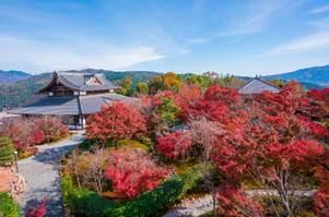 京都市山科區「將軍塚青龍殿」 200公尺高地將京都市區盡收眼底