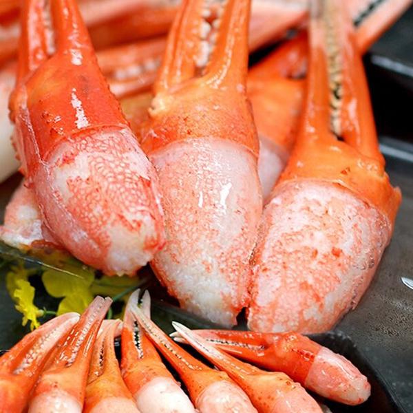 日本松葉蟹鉗