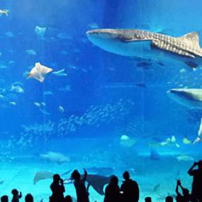 日本住宿訂房推薦:沖繩水族館