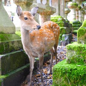 日本住宿訂房推薦:奈良