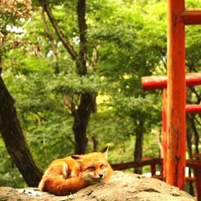 日本旅遊必去景點:藏王狐狸村