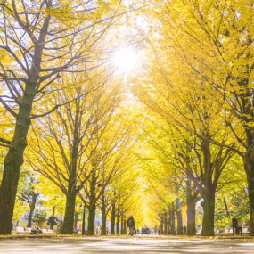 日本旅遊推薦箱根賞楓