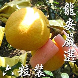 龍安果園優質高接梨