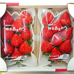 日本福岡.博多草莓