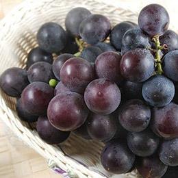 苗栗卓蘭無毒巨峰葡萄