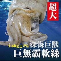 巨無霸軟絲(1.6kg)