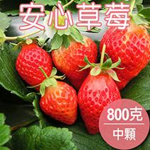 【農夫家】苗栗大湖★安心草莓