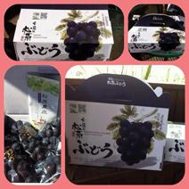 帝王級葡萄2.5kg