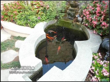 魚池裏還有美麗的鯉魚呢!!! 住在這裡的鯉魚好幸福~
