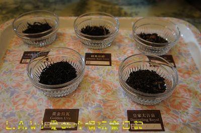 這五種茶的茶葉形狀給大家觀察。