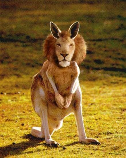 Photoshop,動物合成圖