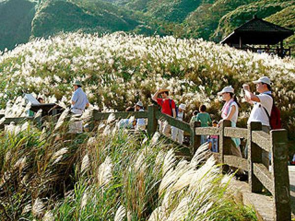 ▲草嶺古道是熱門登山步道,以芒草山頭聞名。(圖/東北角風管處提供)