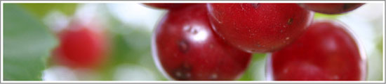 部落客, 艾兒喜,櫻桃注養拉提凝膠面膜